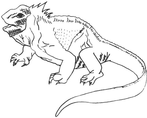 galapagos coloring pages - photo#5