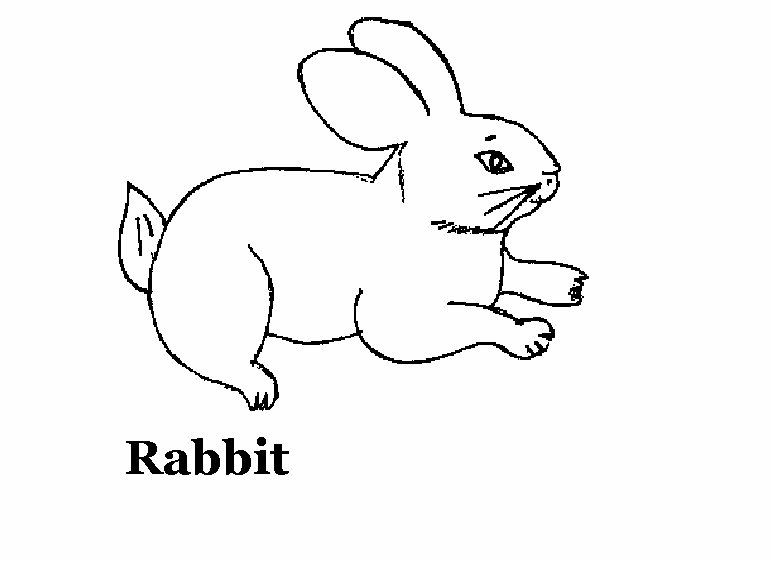 domestic animals coloring pages - photo#14
