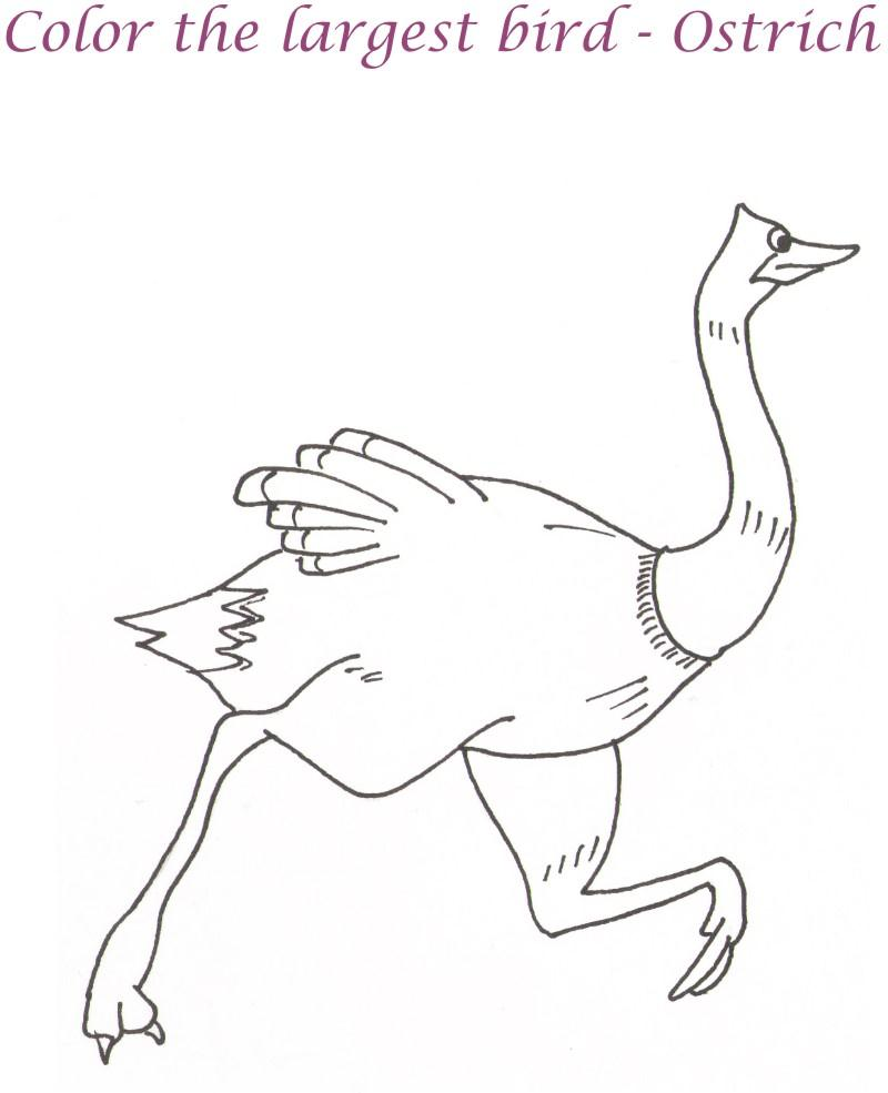 How To Draw An Ostrich Step by Step Drawing Guide by