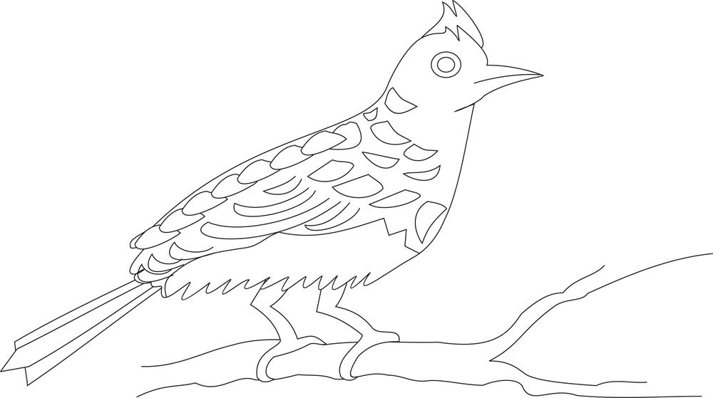 Bulbul Bird Coloring Pages Sketch Coloring Page